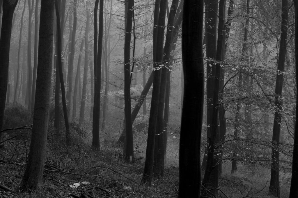 Winter Forest - Mists in the bare trees