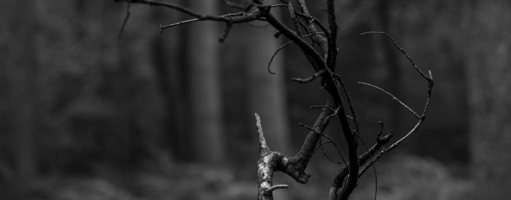 Winter Forest - Reaching out her claws